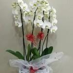 ısparta çiçekci (4)